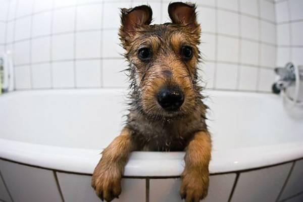 Как избавиться от запаха собаки в доме