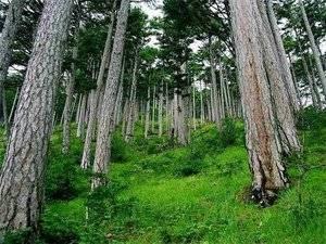 Какие деревья бывают в лесу