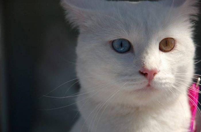 Красивые породы кошек фото и название