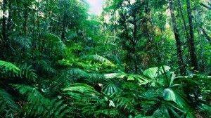 Тайга как экосистема