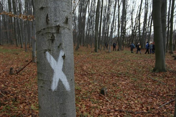 Последствия уничтожения лесов