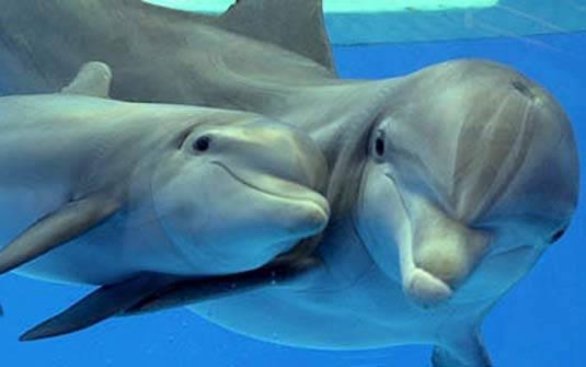 Разновидность дельфинов