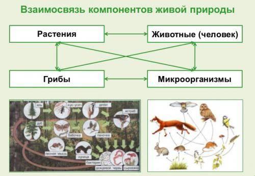 Роль растений в экосистеме