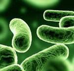 Польза и вред бактерий для человека
