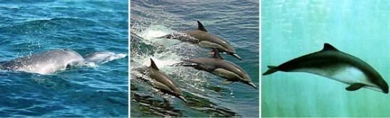 Отряд китообразные