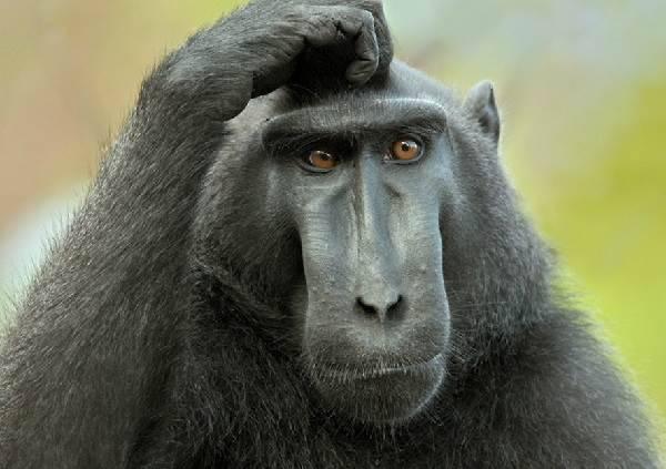 Все про обезьян