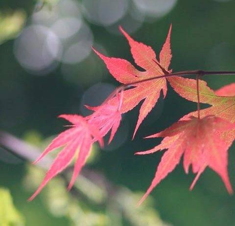 Сочинение описание на тему осень