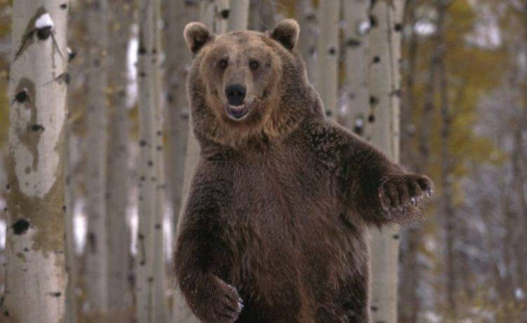 Какой медведь имеет самый длинный мех