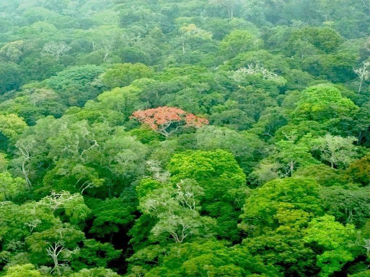 Обеспеченность россии лесными ресурсами