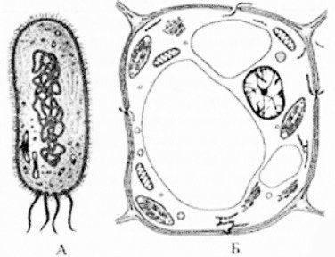 Последовательность процессов протекающих при фотосинтезе