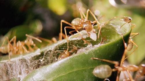 Информация про муравьев