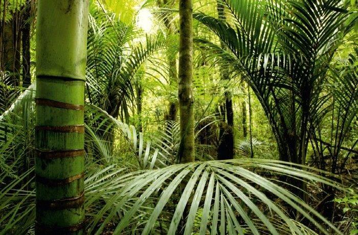 Растения тропического леса фото с названиями