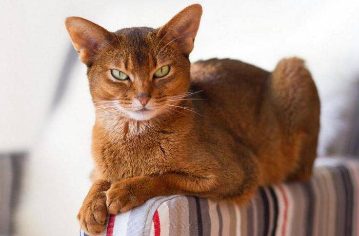 Интересные породы кошек