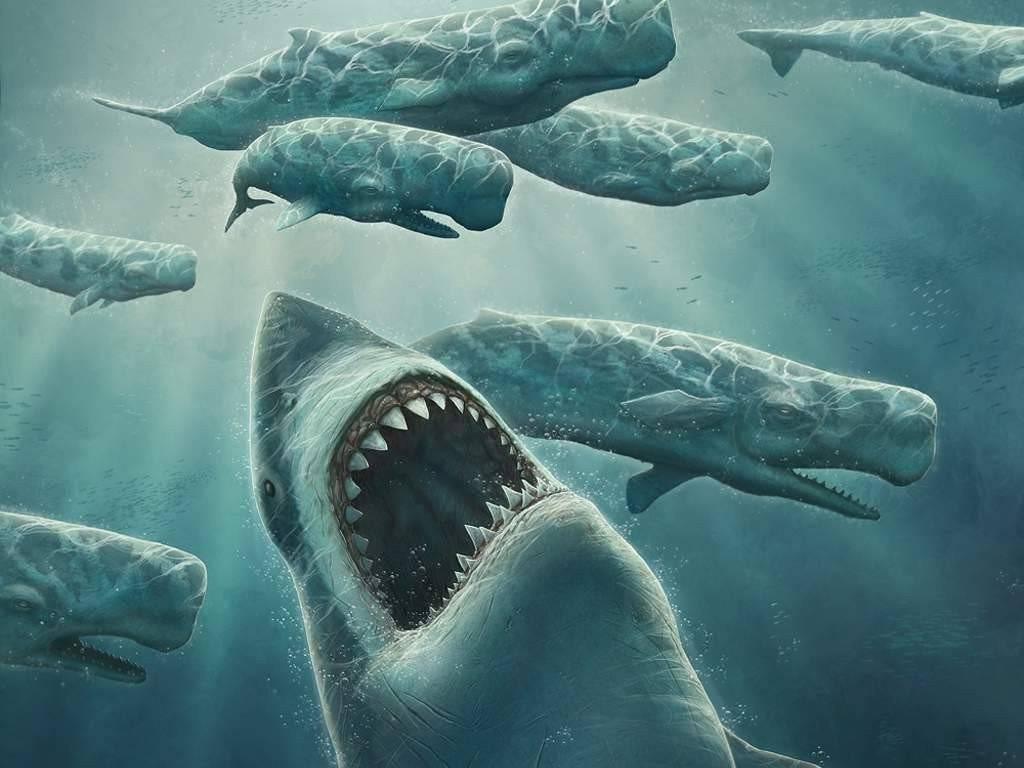 Акула мегалодон фото и размеры