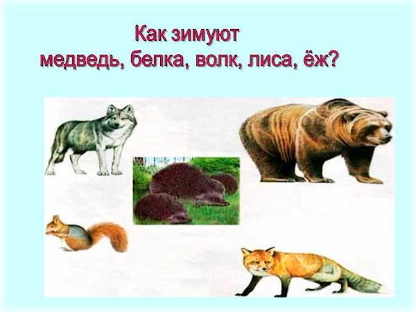 Животные осенью сочинение