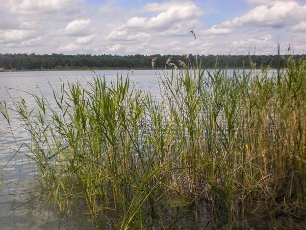 Озера сибири список
