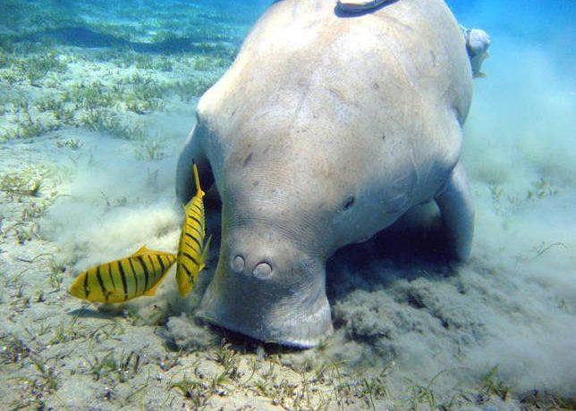 Водные млекопитающие животные