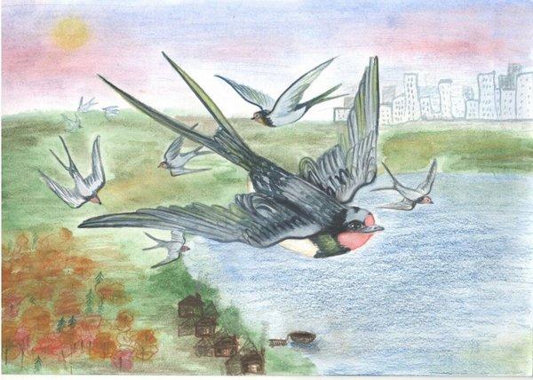 Перелетные птицы список с картинками