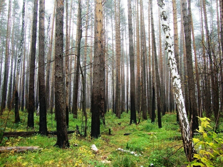 Лесной лес