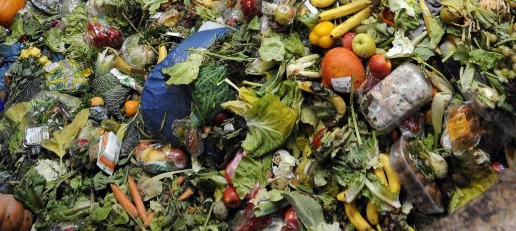 Сроки разложения мусора в природе