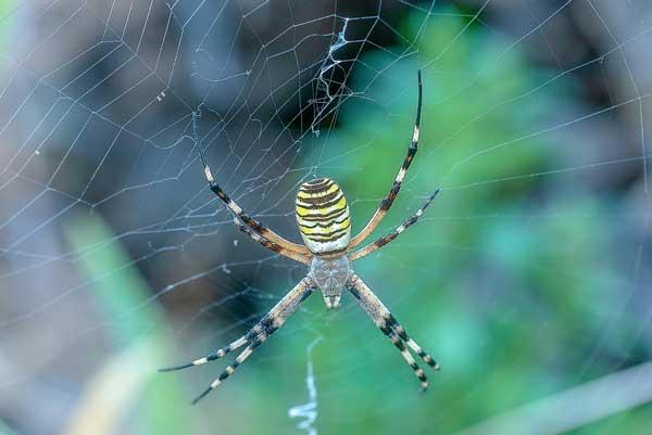 Сообщение на тему паукообразные