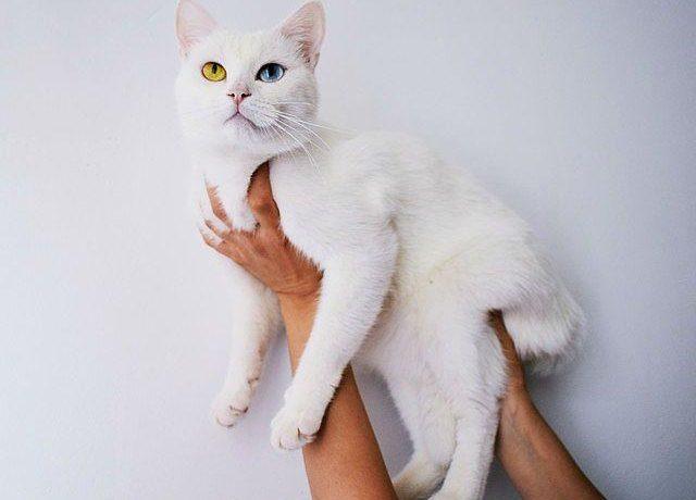 Клички для белых кошек