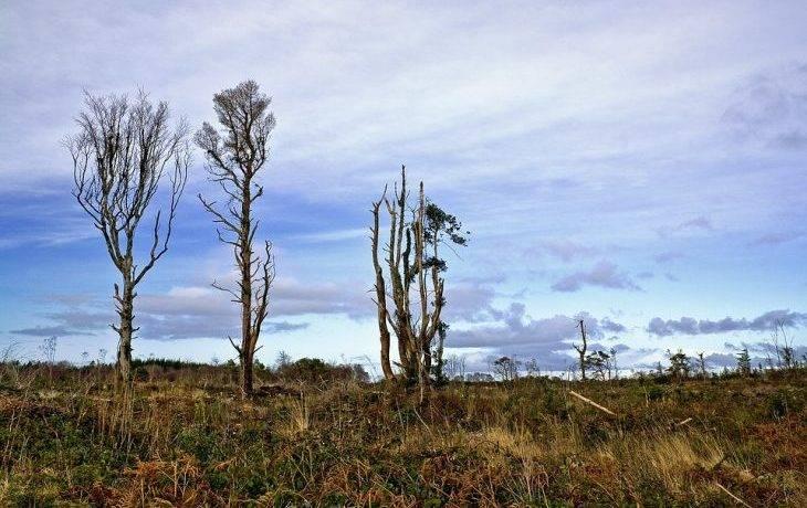 Красивое описание леса