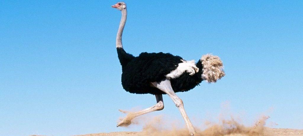 Самая большая летающая птица на земле