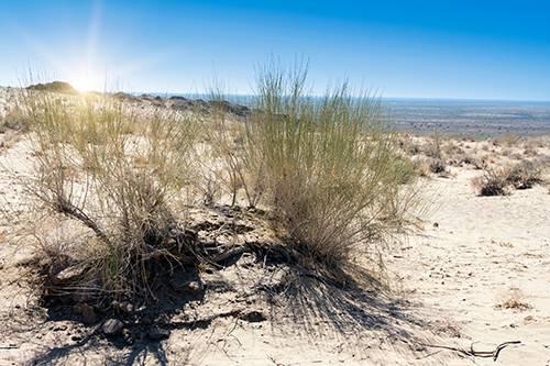 Какие растения обитают в пустыне