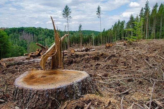 Экологическое состояние россии