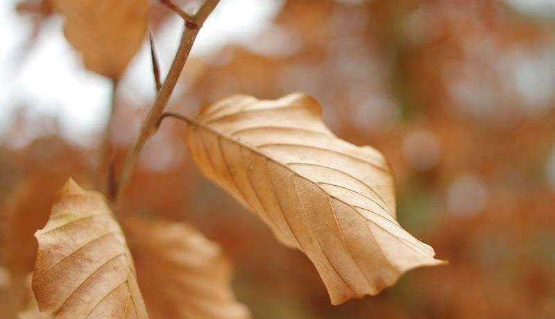 Сочинение про осенний лес 5 класс