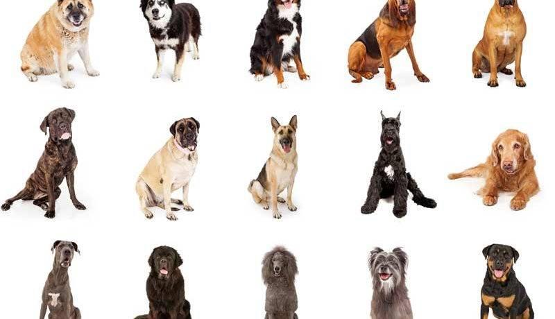 Количество пород собак в мире