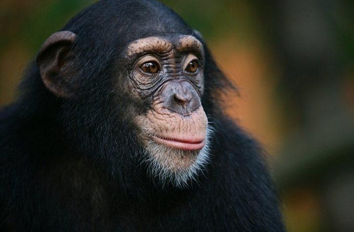 Самое умное животное на земле после человека