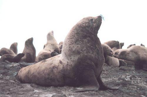 Животные обитающие в тихом океане