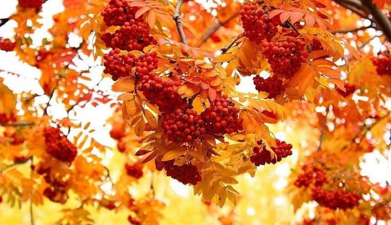 Золотая осень описание природы