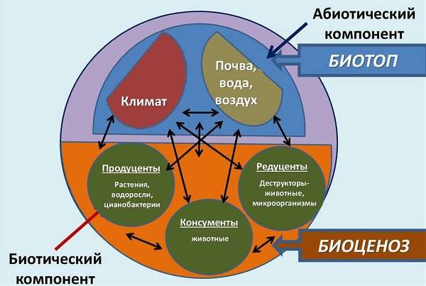 Виды экосистем их характеристика