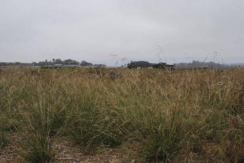 Особенности живой природы зоны степей растения