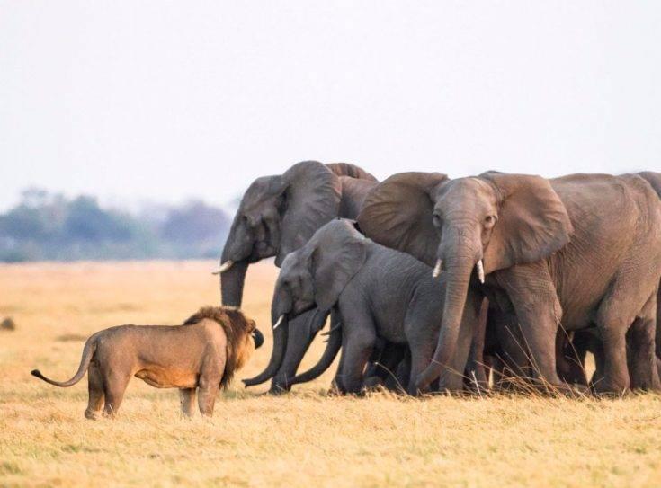 Как выглядит слон фото