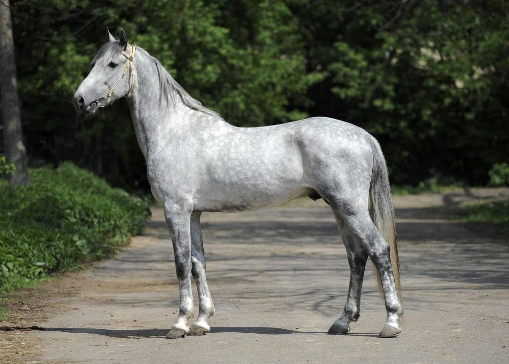 С какой скоростью бежит лошадь