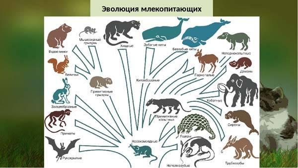 Когда появились первые млекопитающие