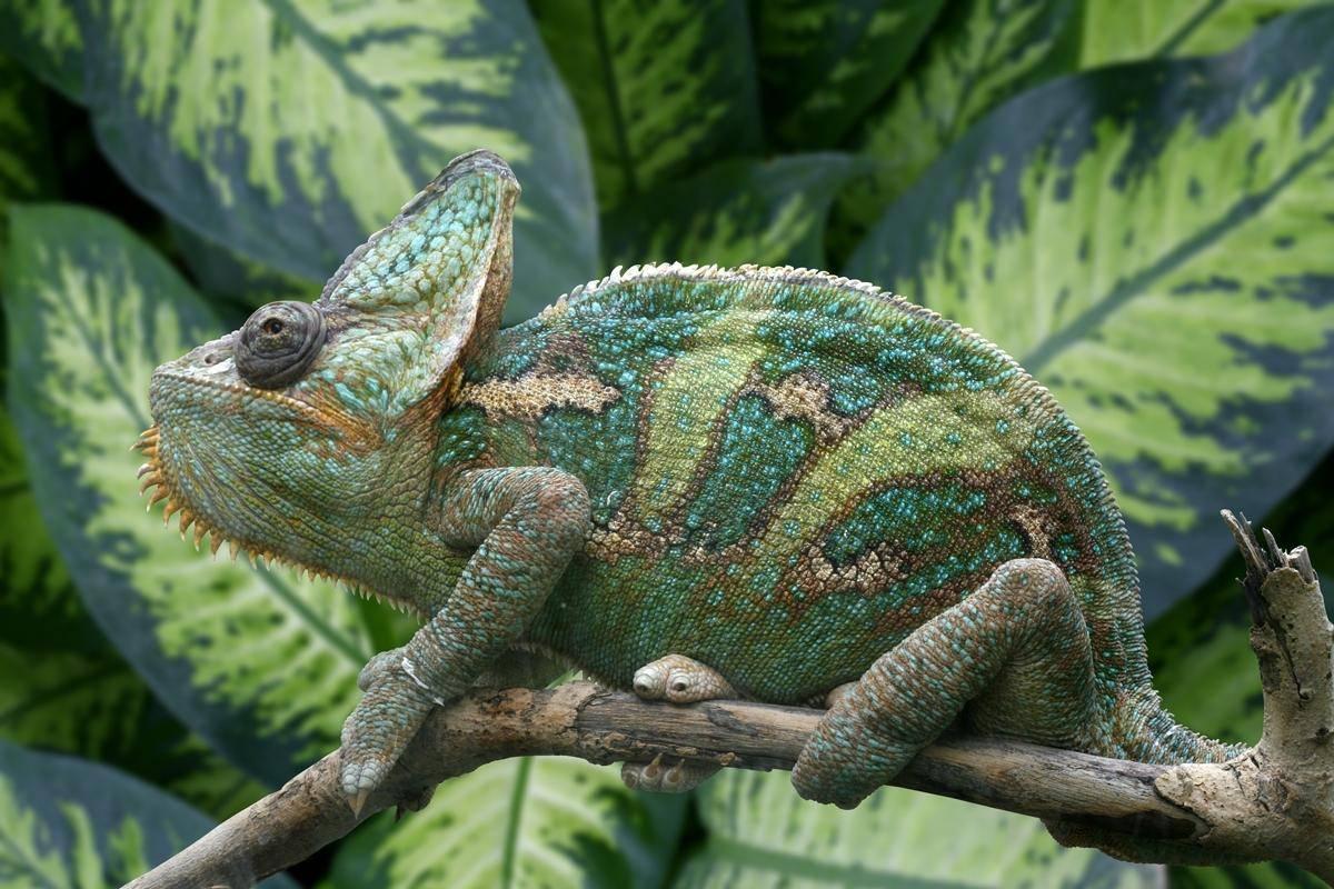 Какие животные земноводные примеры