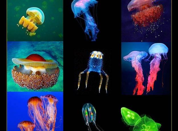 Как передвигается медуза