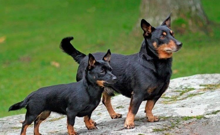Маленькие собаки фото с названиями