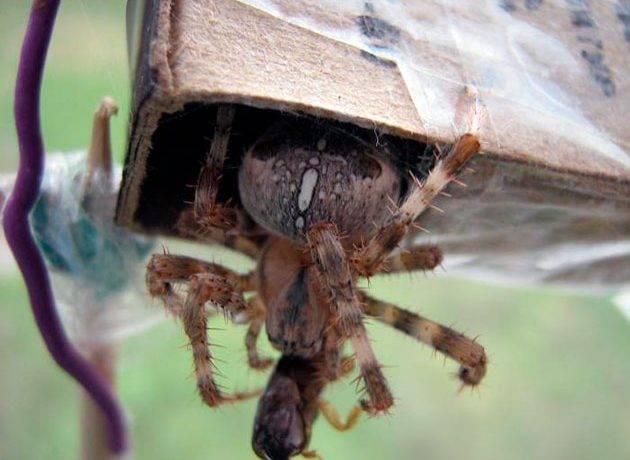 Питание пауков