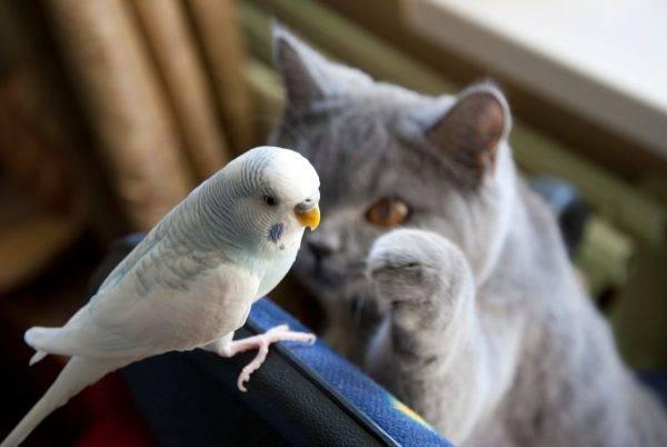 Сколько лет живет волнистый попугайчик
