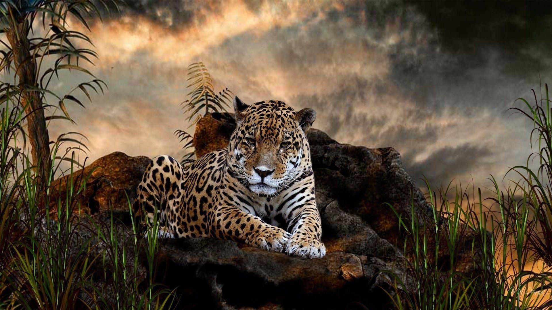 Как выглядит ягуар животное фото