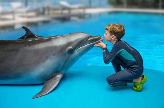 Дельфин это рыба или млекопитающее животное