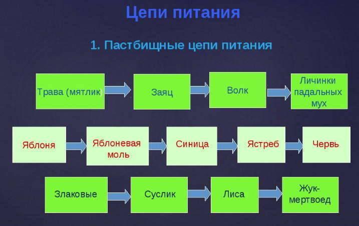 Пример детритной пищевой цепи