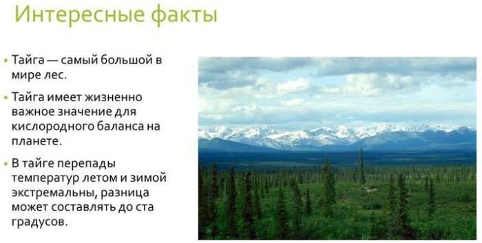 Тайга природная зона россии