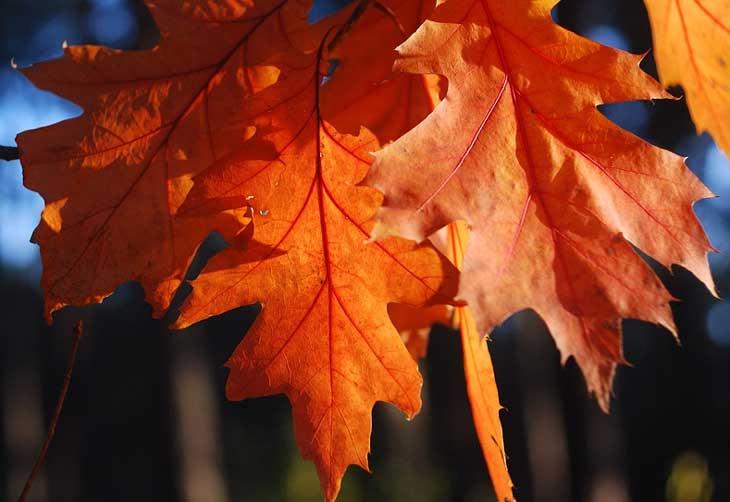 Сочинение на тему природа осенью